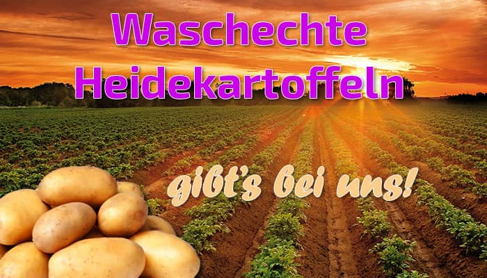 Heidekartoffeln gibt es bei uns
